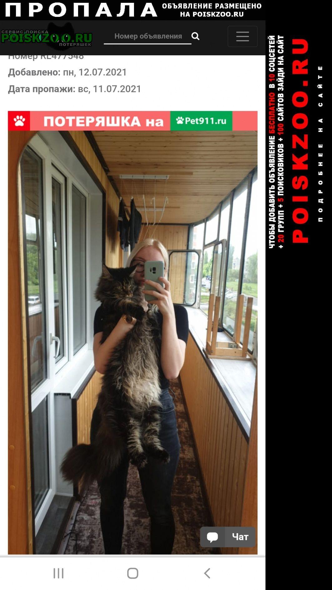 Пропала кошка мейнкун 1, 5 года Курск