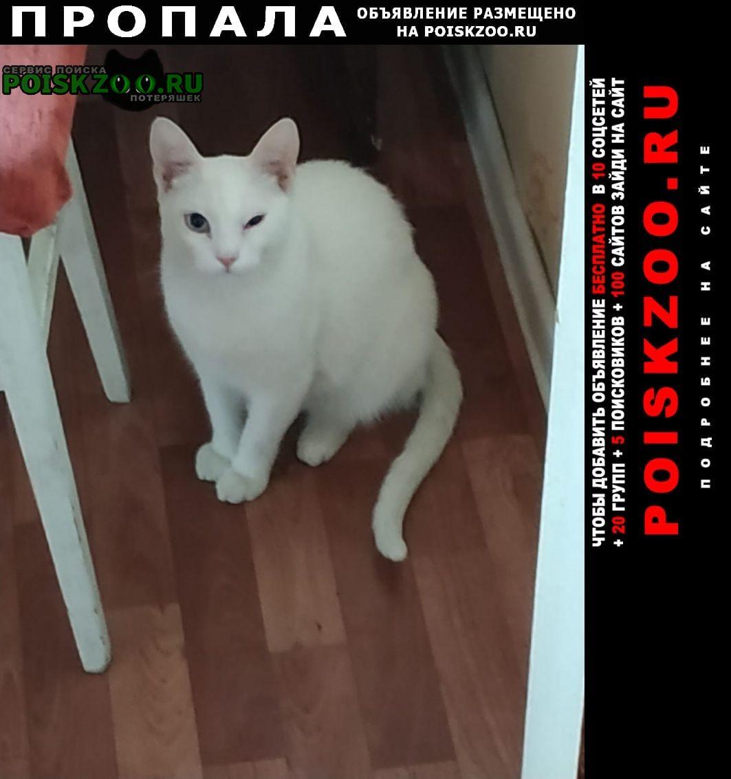 Пропал кот белый Тула