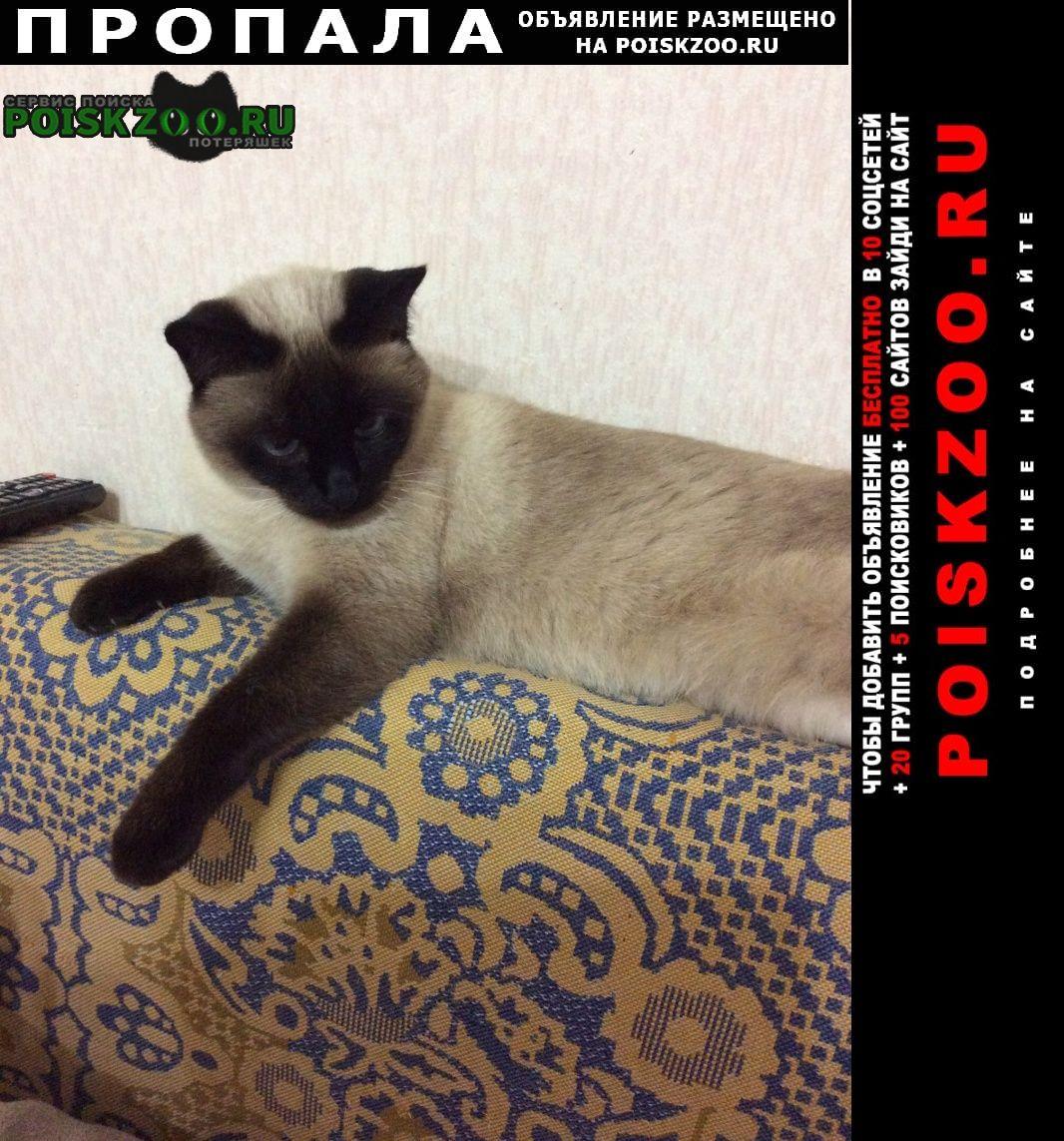 Пропала кошка зовут кира Ростов-на-Дону