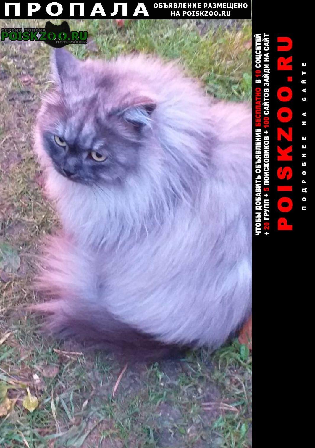 Пропала кошка телищево Ярославль