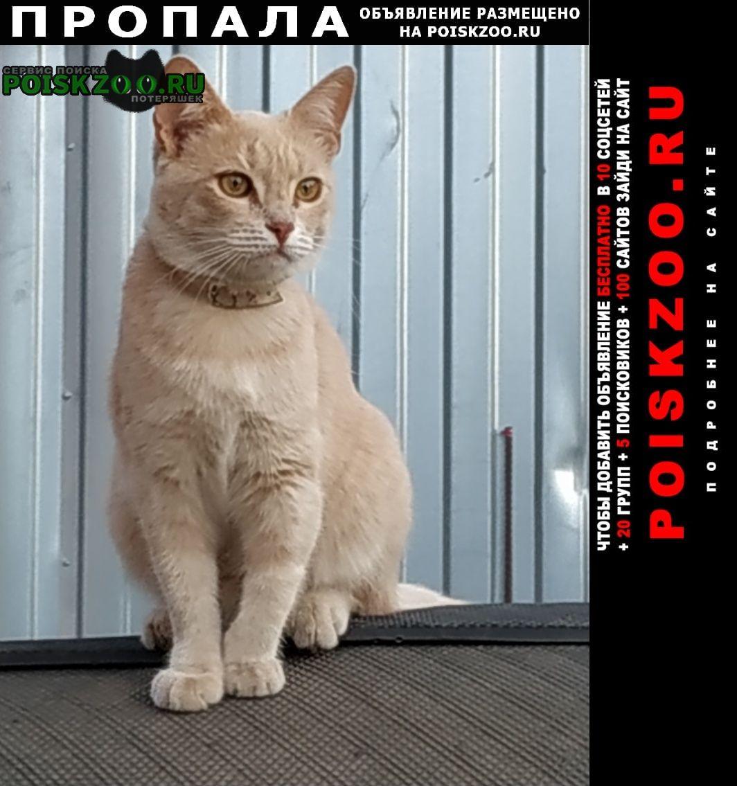 Пропала кошка Иваново