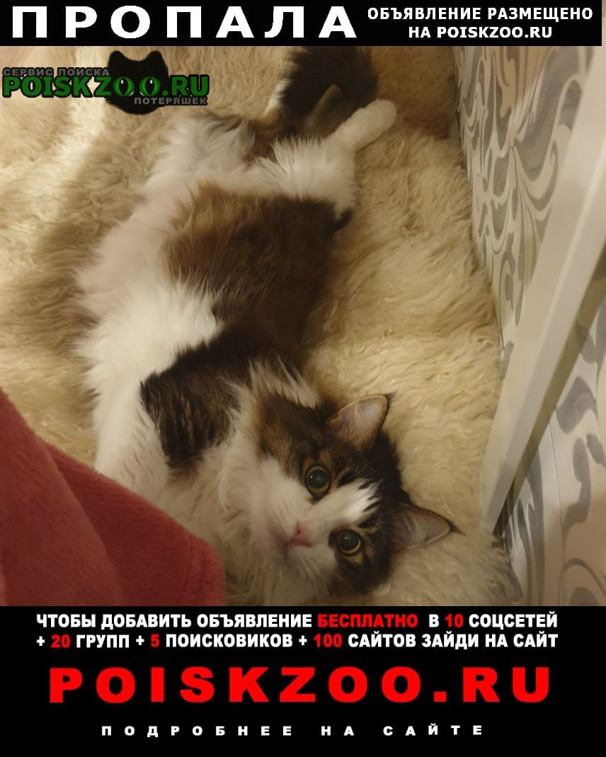 Пропала кошка ому вознаграждение Санкт-Петербург