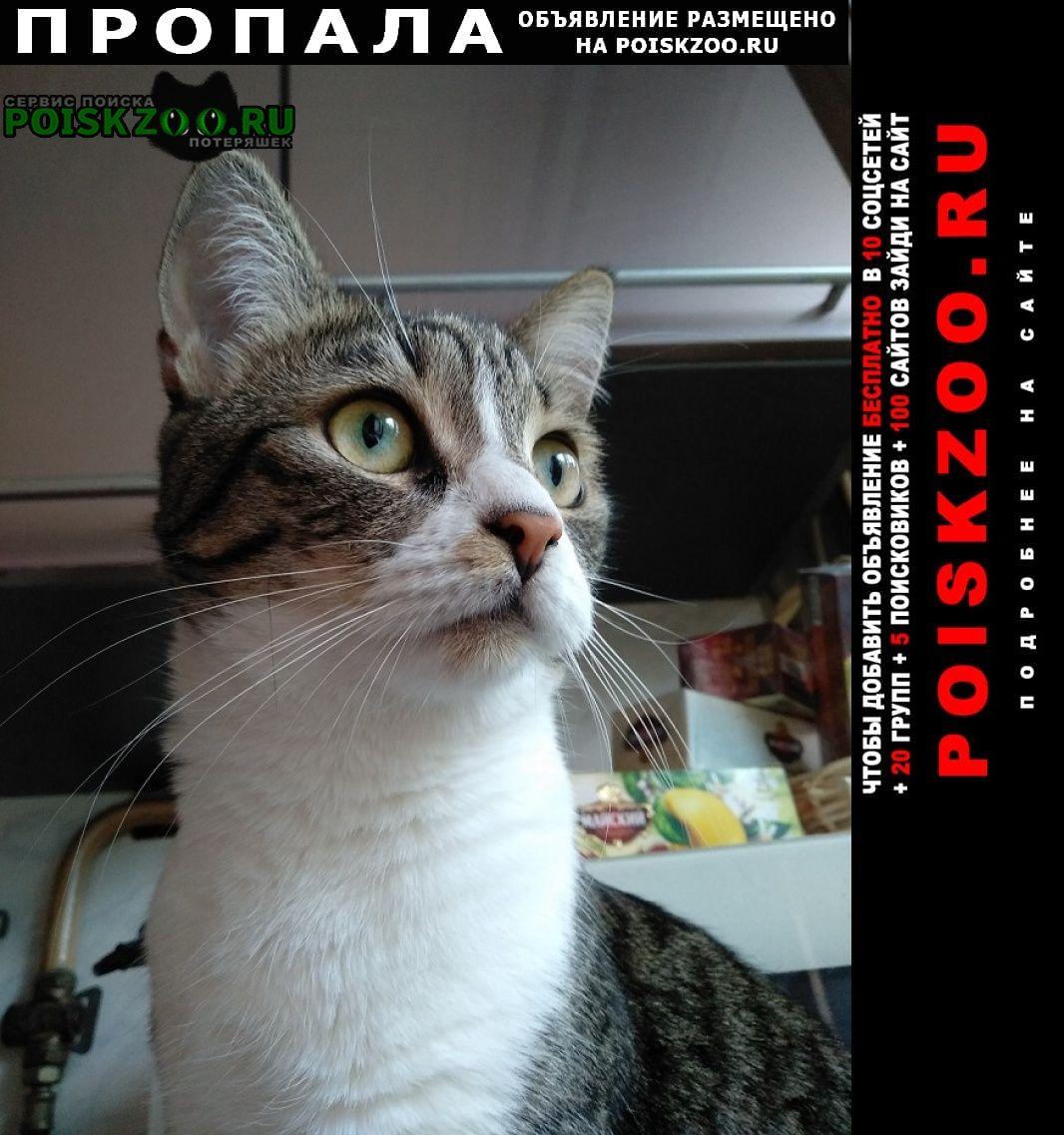 Пропала кошка потерялась. маршала блюхера 14 Санкт-Петербург