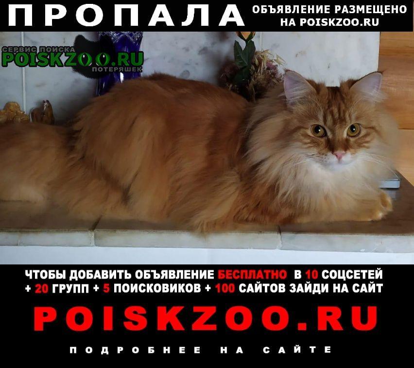 Пропала кошка Можайск