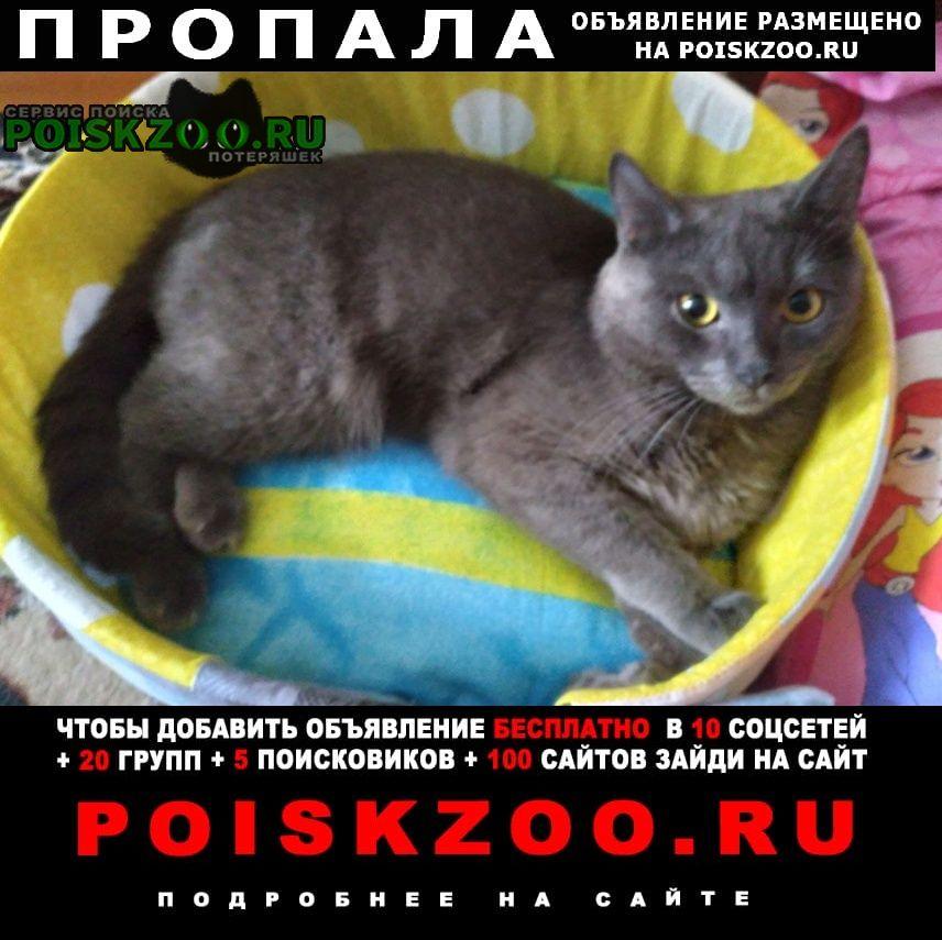 Пропал кот 2 года, британец-мышелов, серого окраса Волгоград