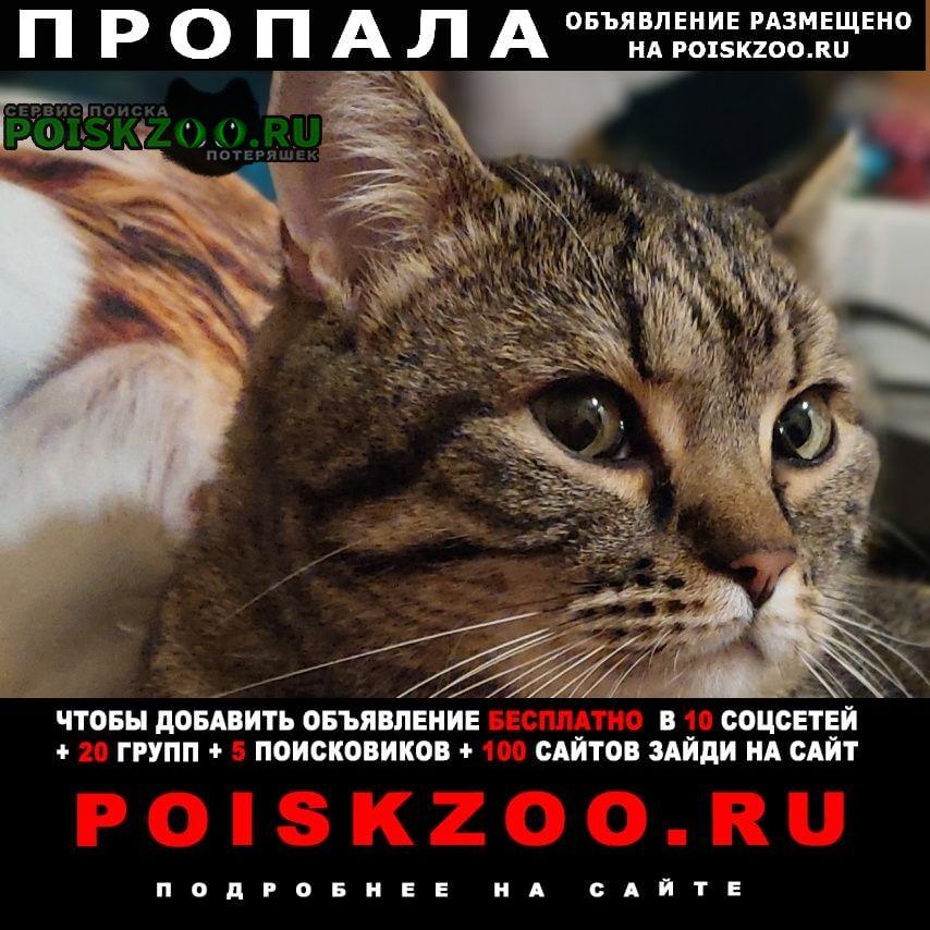 Пропал котик шалфей Щекино