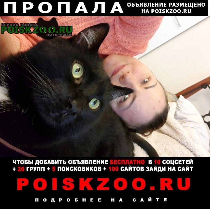 Пропал кот черный Москва