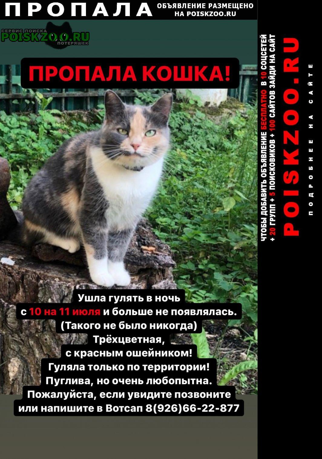 Пропала кошка кратово Раменское