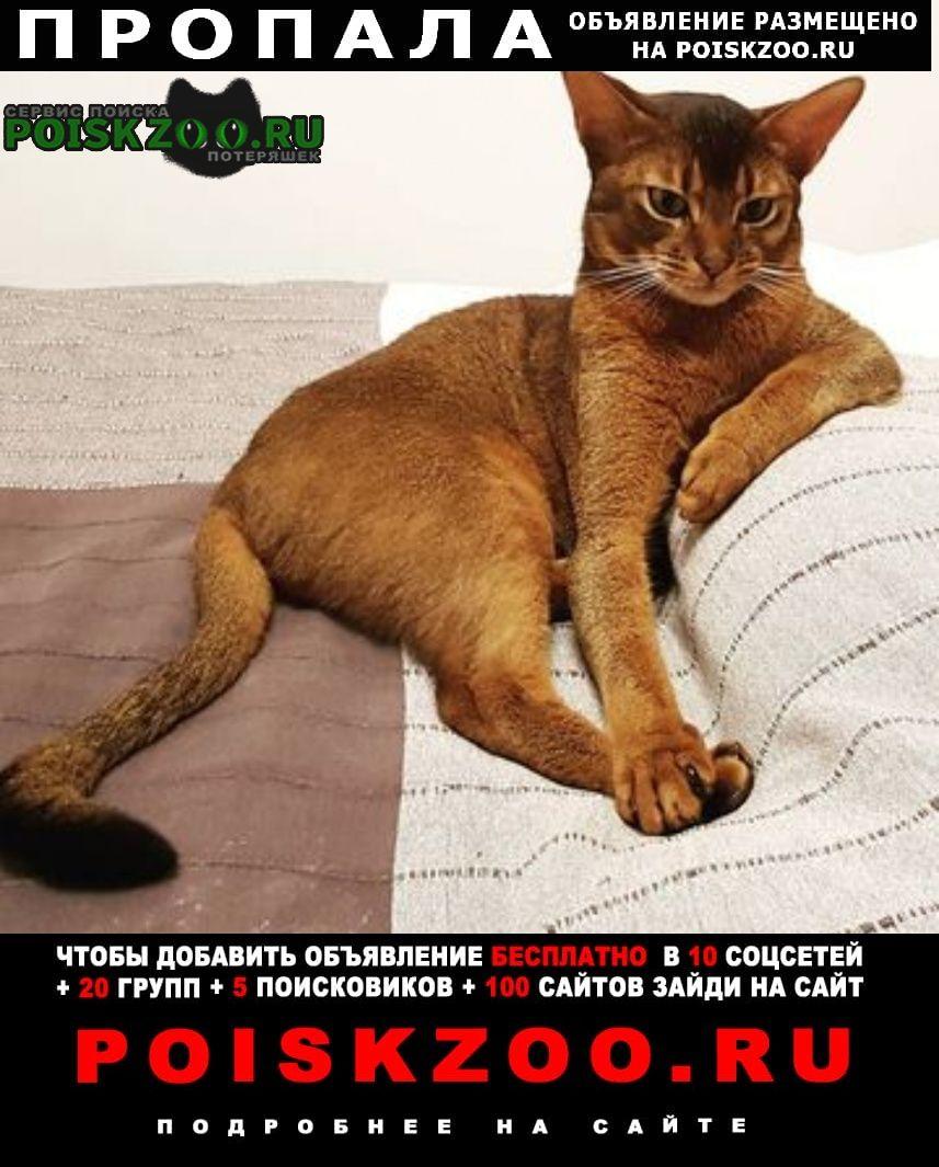 Пропал кот. м. бибирево ул. белозерская Москва