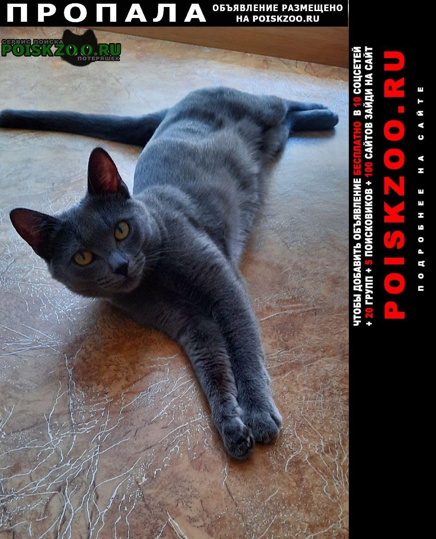 Пропала кошка очень важно 63/01 Набережные Челны