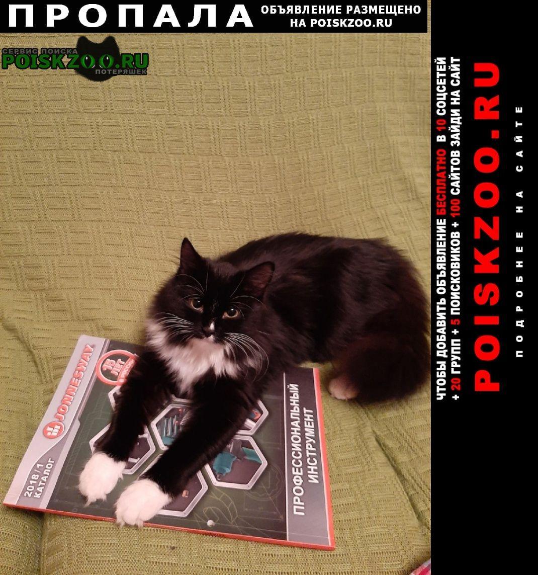 Пропала кошка вознаграждение гарантируем Пермь