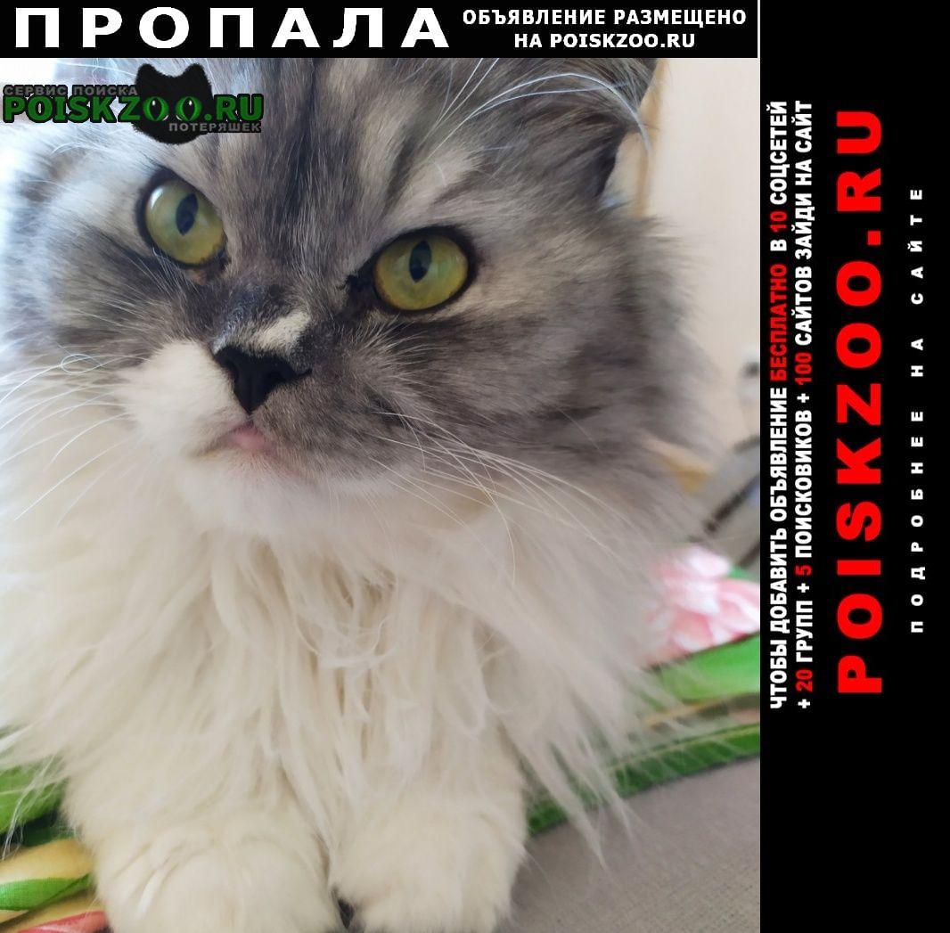 Пропал кот Брянск