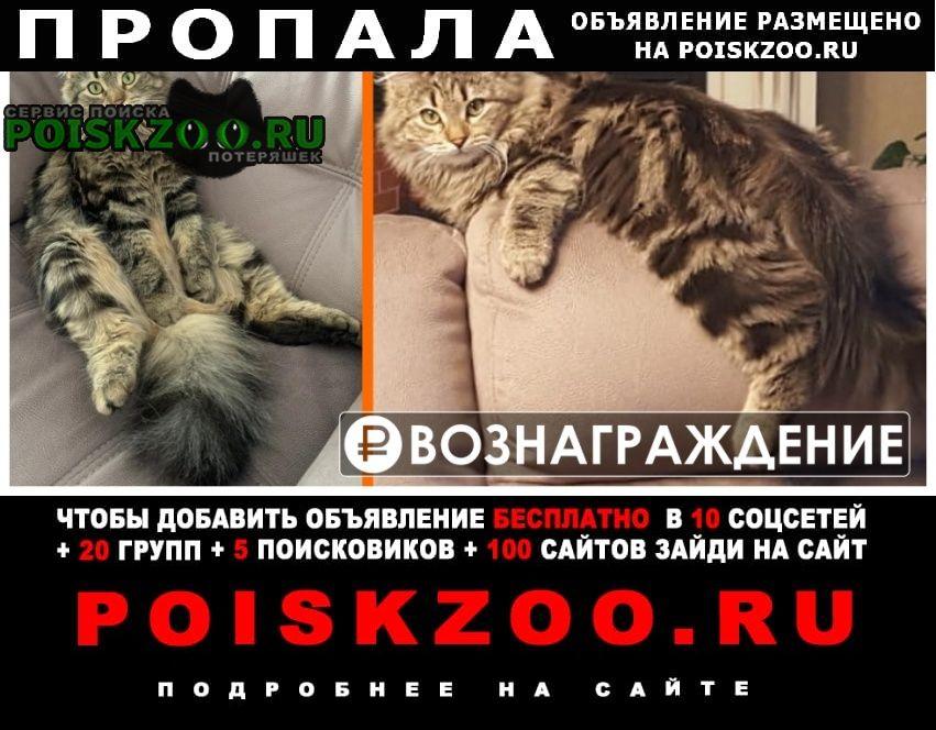 Пропал котик 2 года мурзик Аксай (Ростовская обл.)