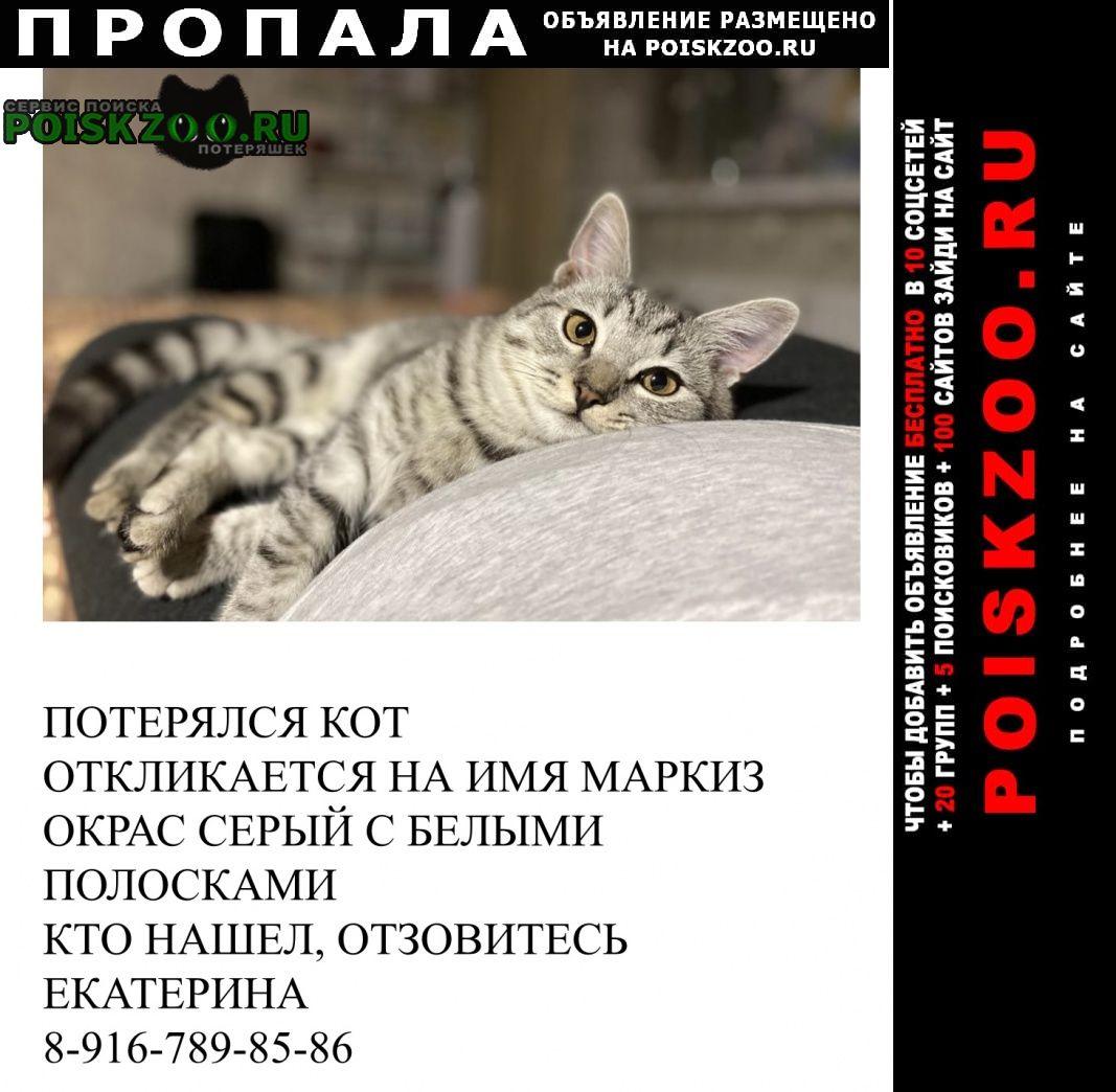 Пропал кот в марусино Москва