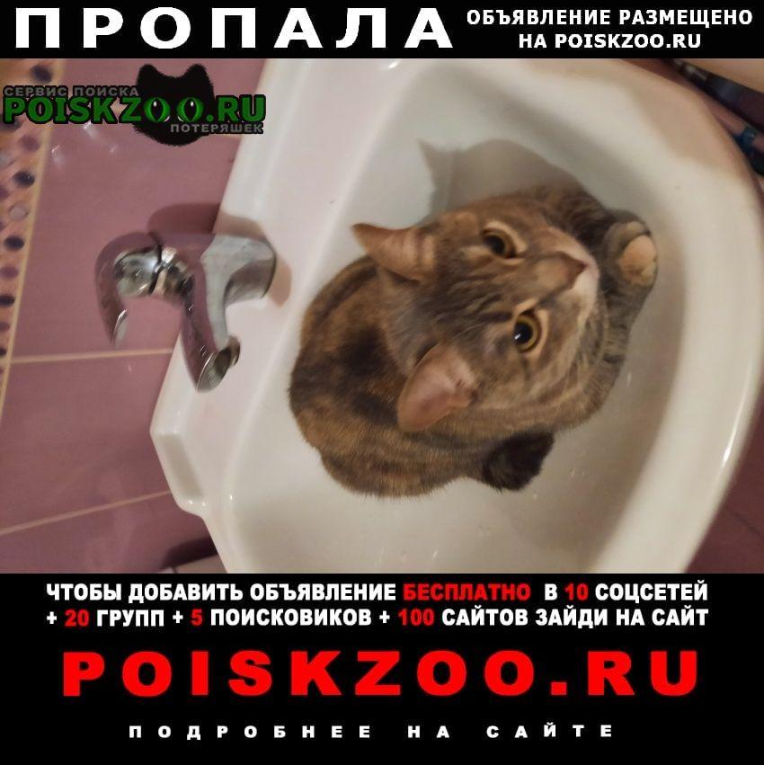 Пропала кошка Санкт-Петербург