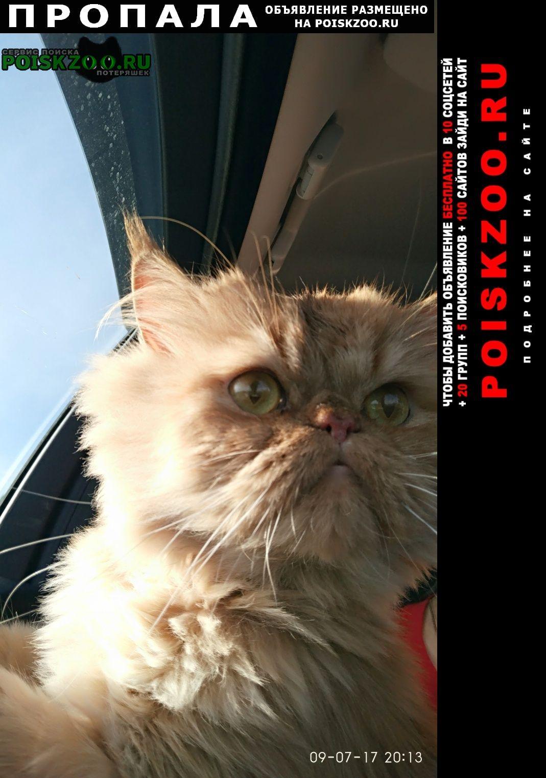 Пропал кот цвет рыжий, глаза зеленые, порода перс Мурманск