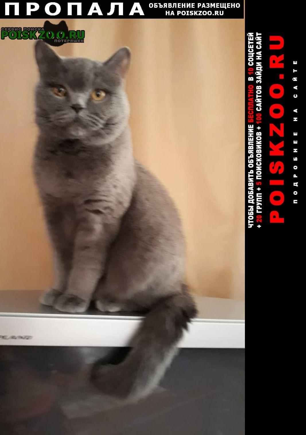 Пропала кошка британка в р-не куркино Москва