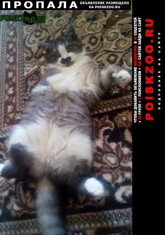 Пропала кошка Северск