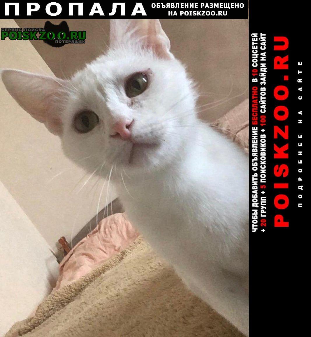 Пропала кошка белая можайский район моск Москва