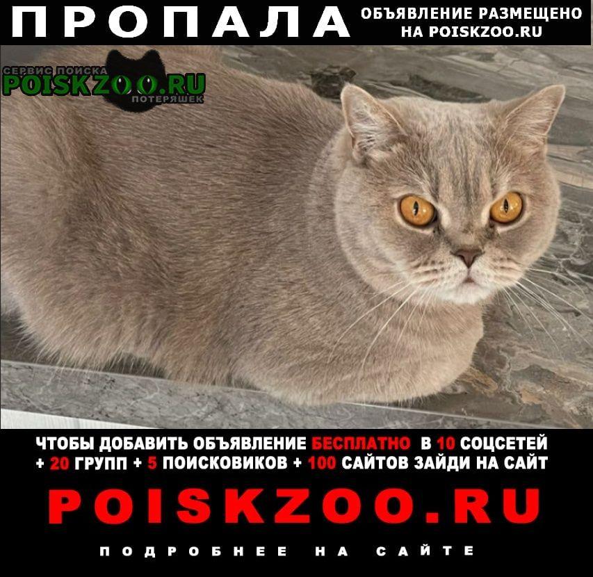 Пропала кошка Тюмень
