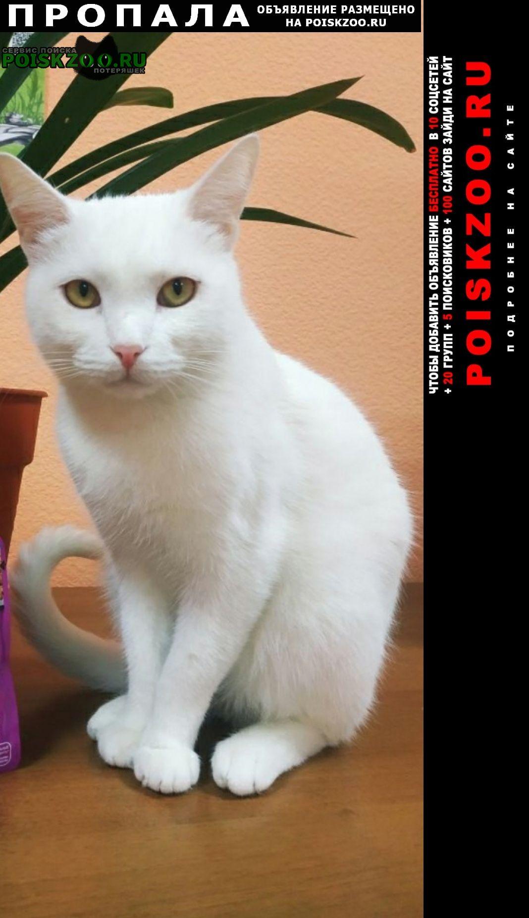 Пропал кот, белого цвета. Нижний Новгород