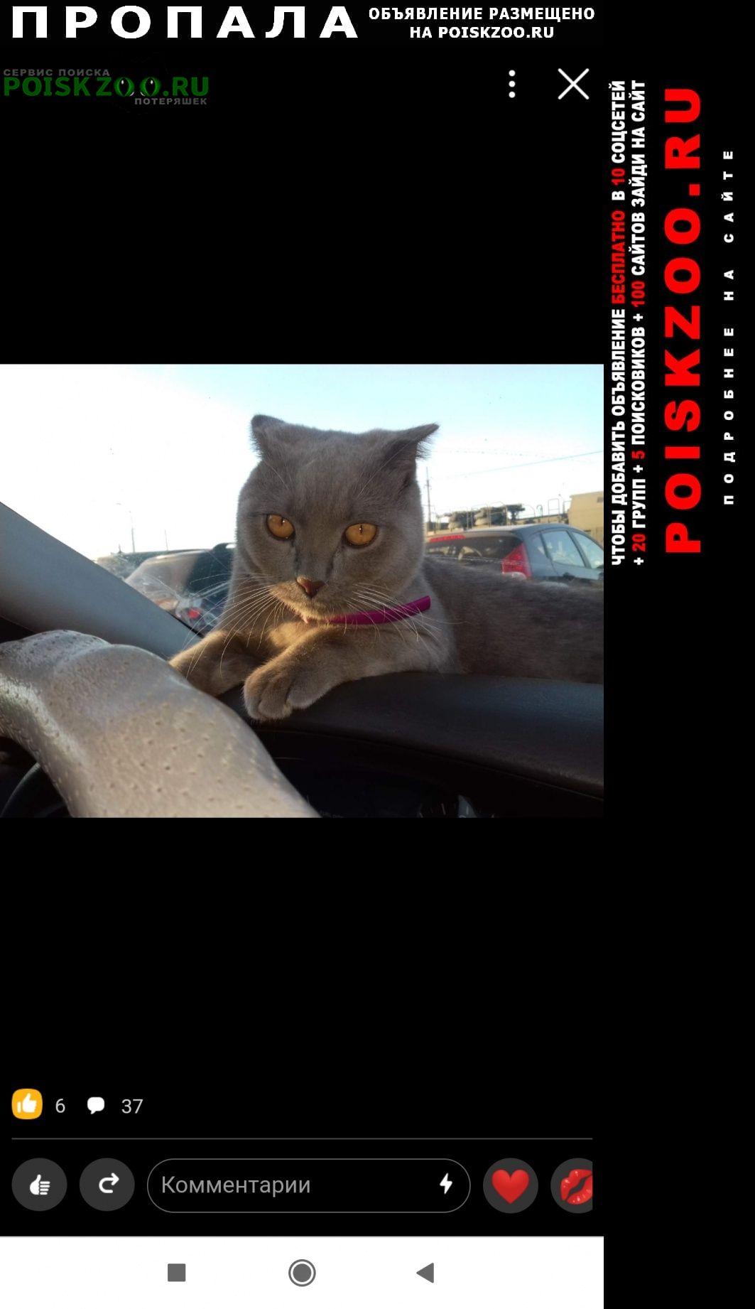 Пропал кот месяц назад барсик Судак