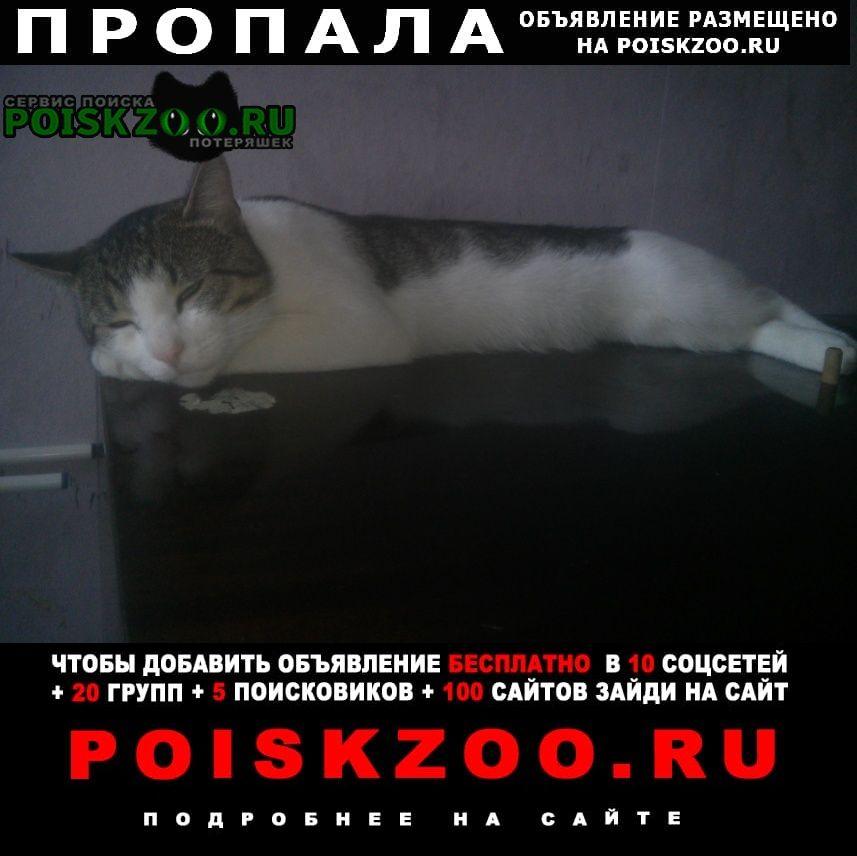 Пропал кот Санкт-Петербург