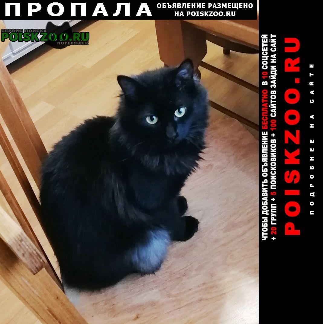 Пропал кот черный п. Дорохово