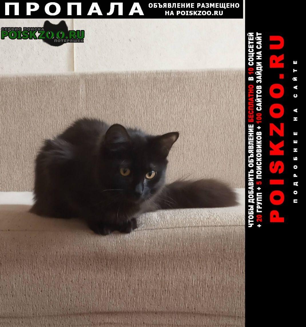 Пропала кошка Владимир