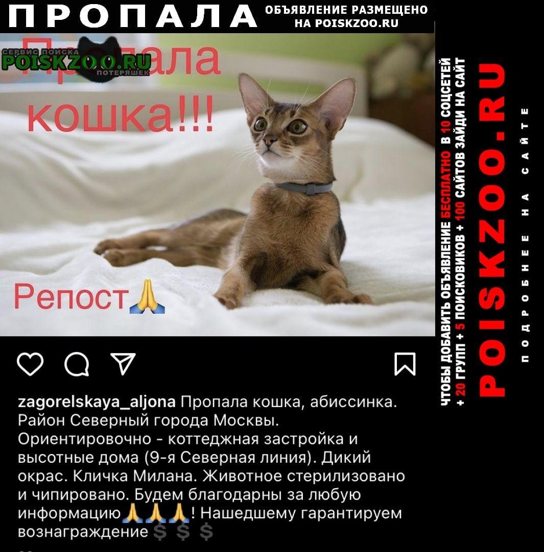 Пропала кошка помогите пожалуйста. Москва