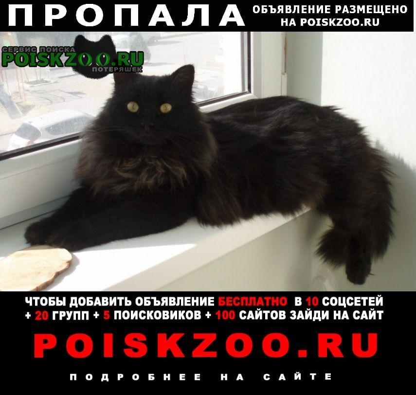 Пропал кот большой черный пушистый Анапа