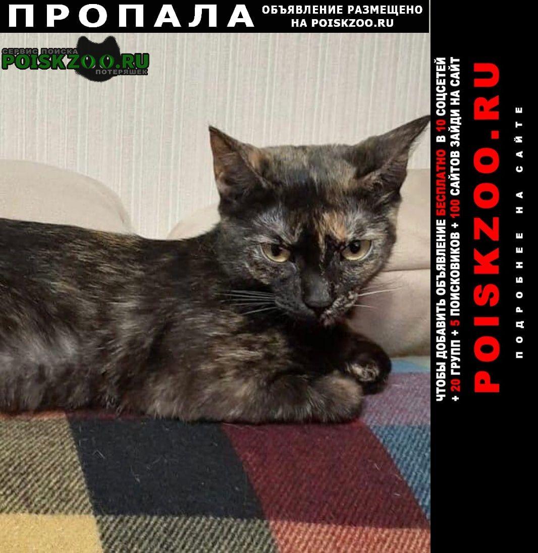 Пропала кошка Новосибирск