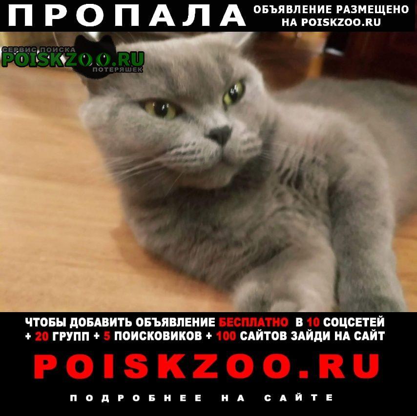 Пропала кошка Екатеринбург