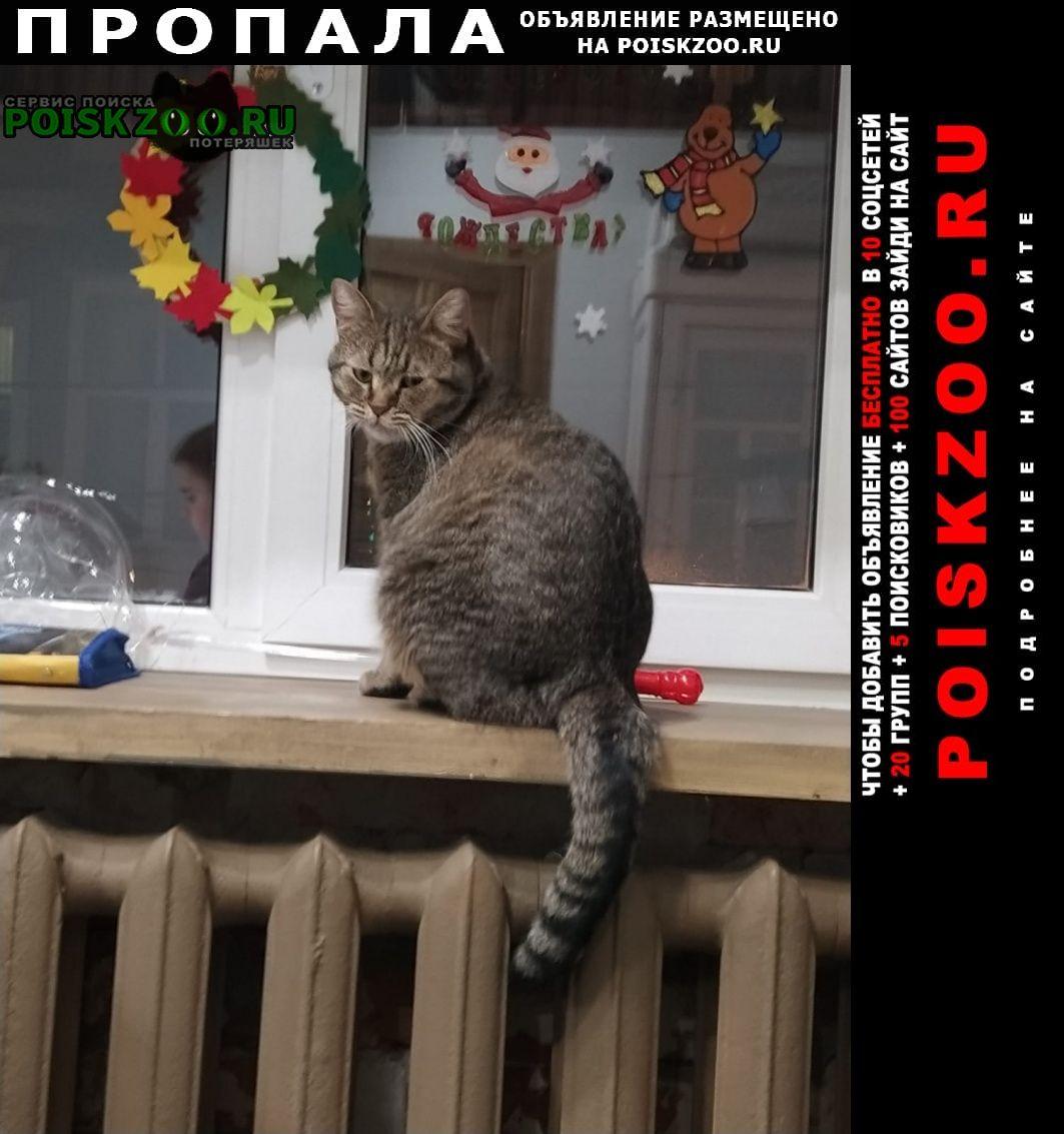 Пропал кот миша Батайск