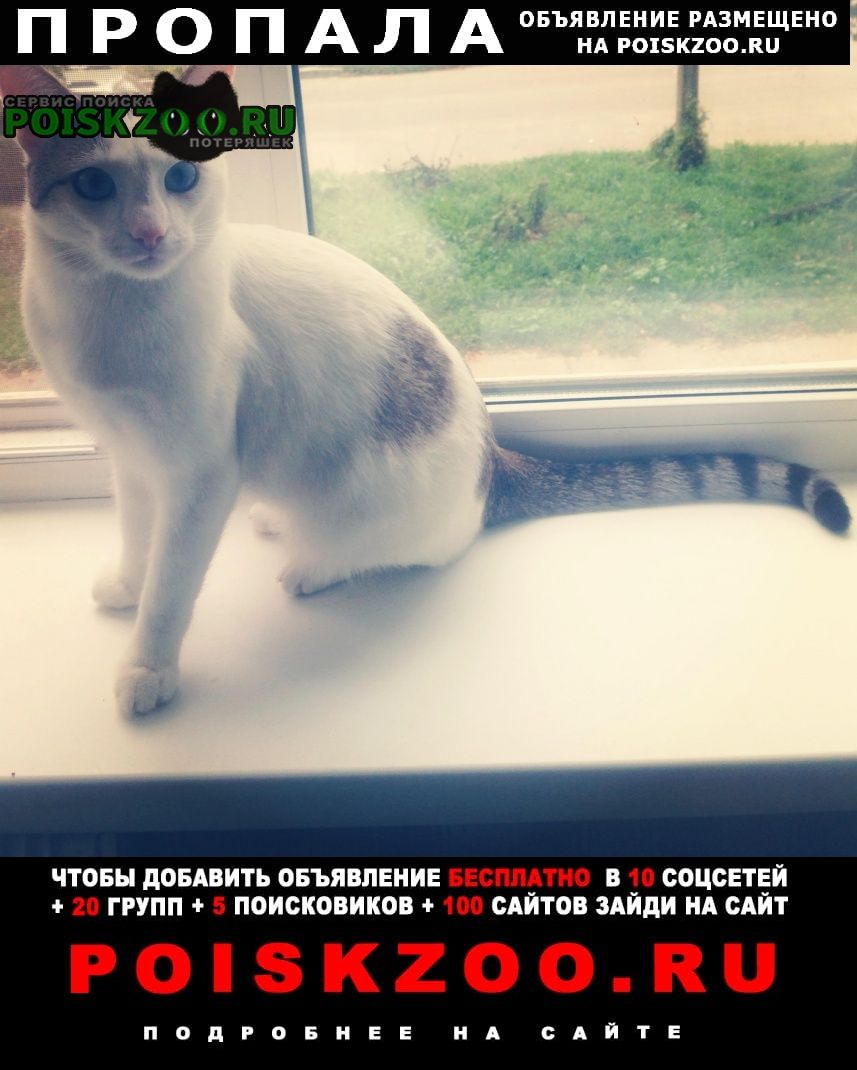 Пропал кот, белый, серые уши, хвост. Чебоксары