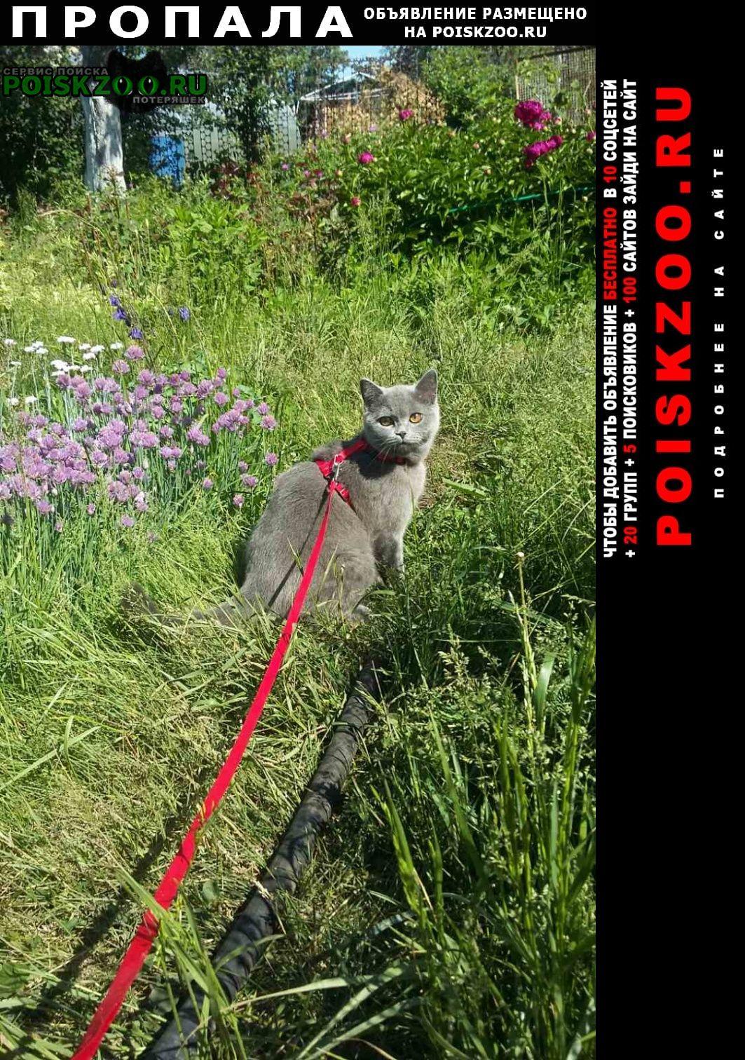 Пропала кошка снт отрада британская Тольятти