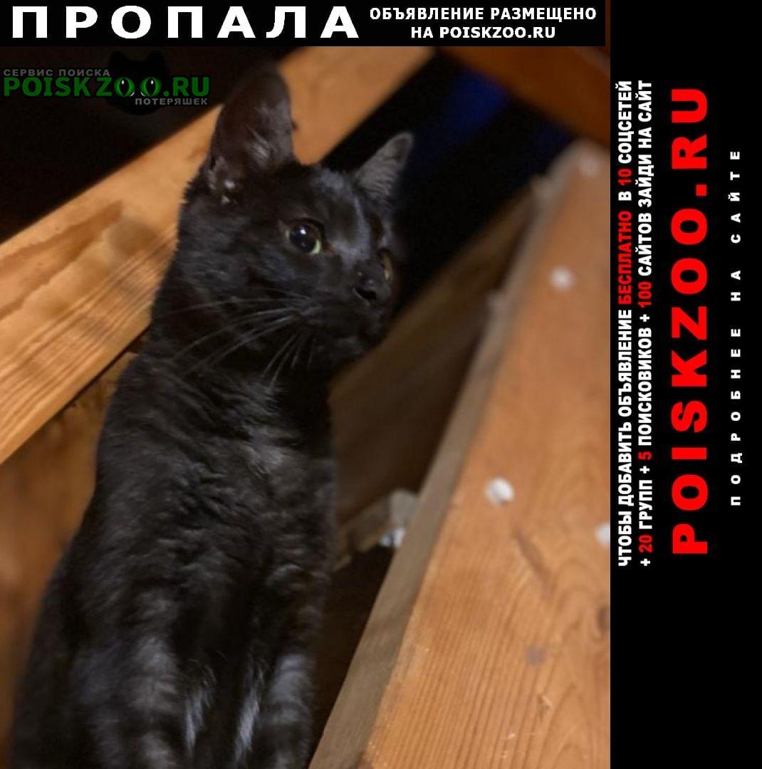 Пропал кот Чехов