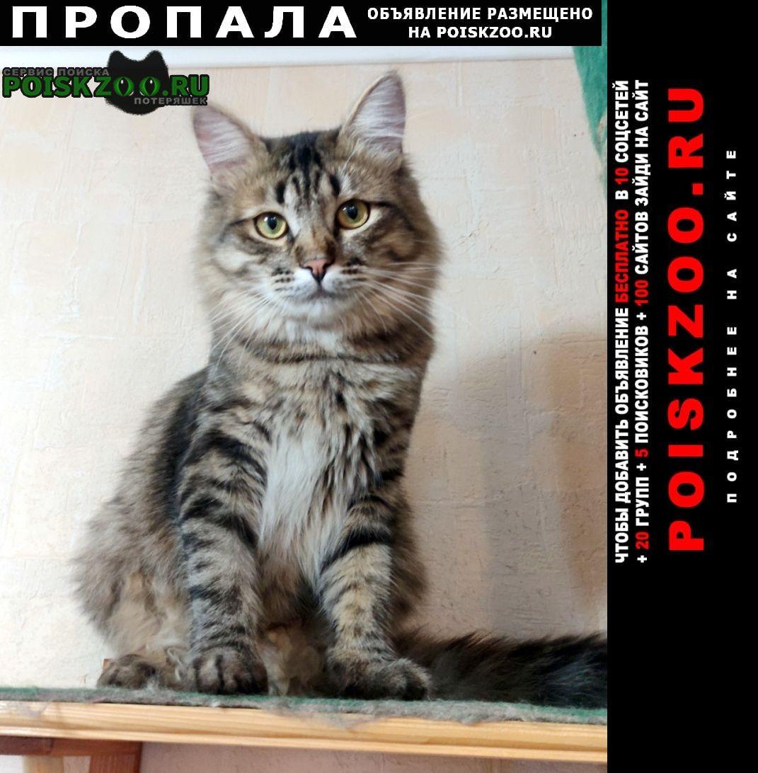 Пропал кот лесного окраса, сибирский. Ярославль