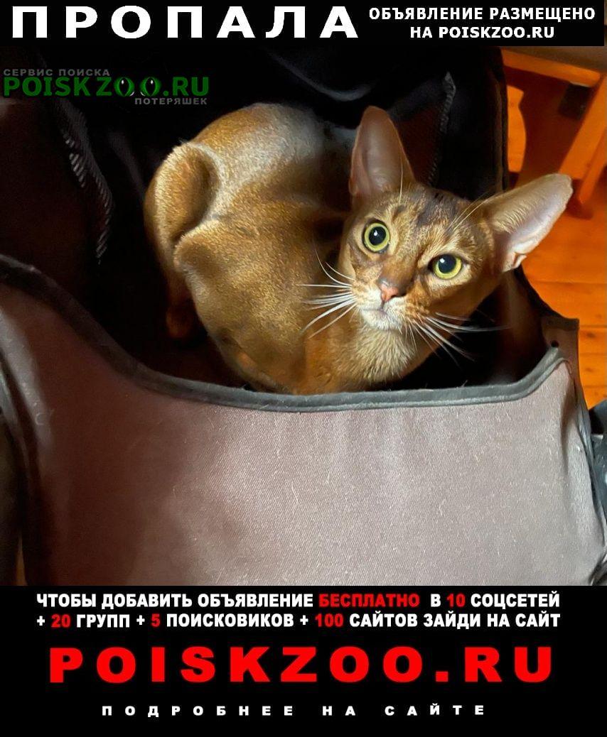 Пропал кот награда 20 000 руб. Солнечногорск