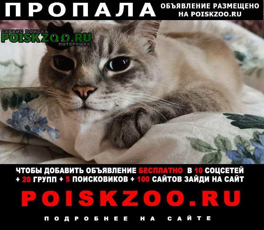 Пропал кот Владивосток