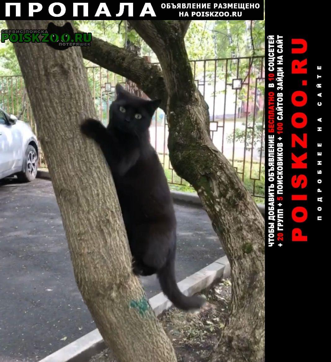 Пропала кошка чёрная Москва
