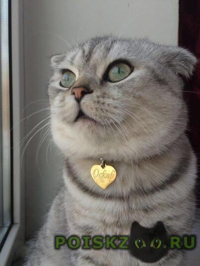 Пропал кот г.Самара