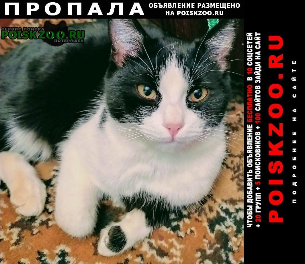 Пропал кот внимание пос.матырский макс репост Липецк