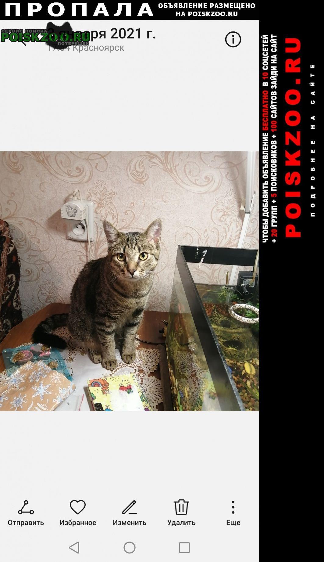 Пропал кот Красноярск