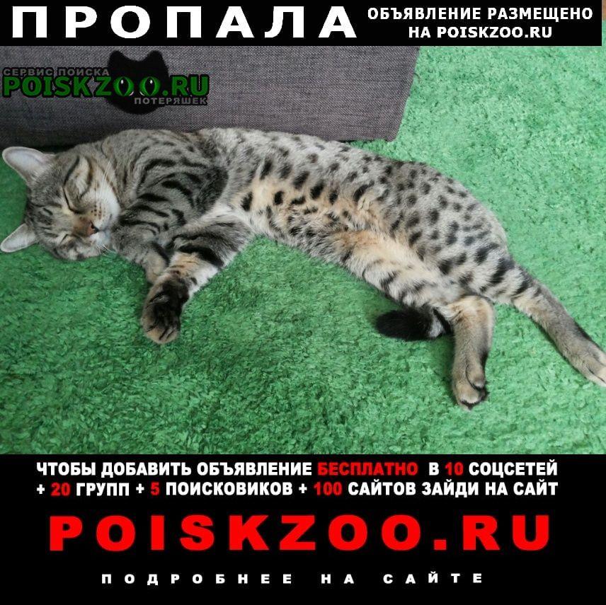 Пропал кот метис бенгала Саратов