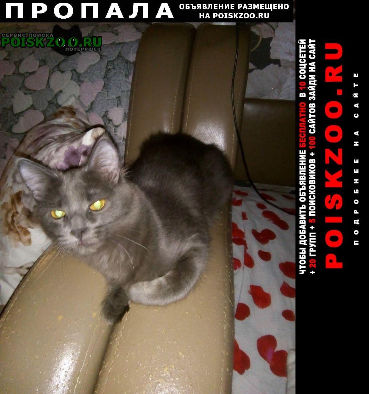 Пропала кошка помогите найти кошку бусинку Троицк