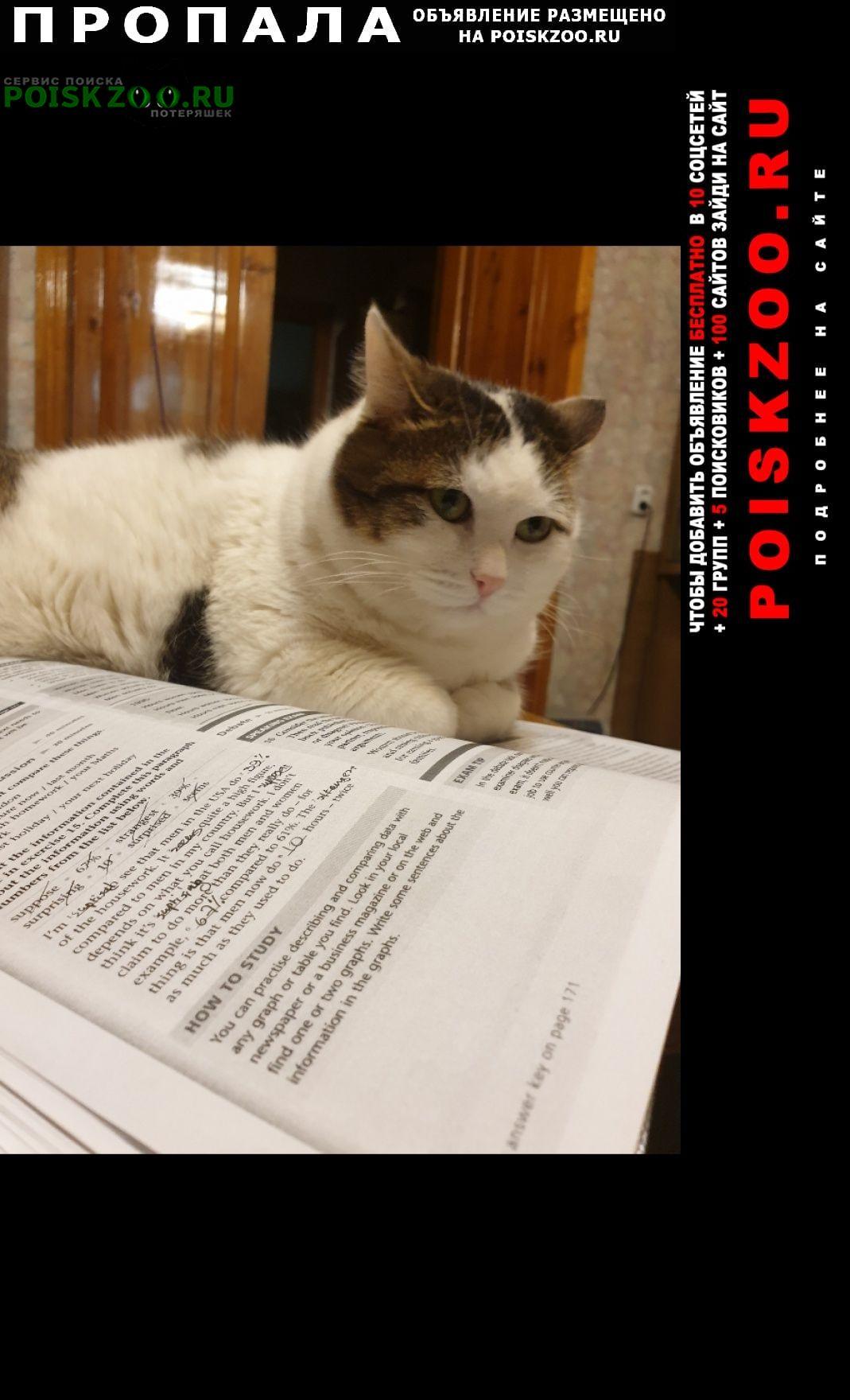 Пропал кот кировский район, около улицы технологиче Екатеринбург