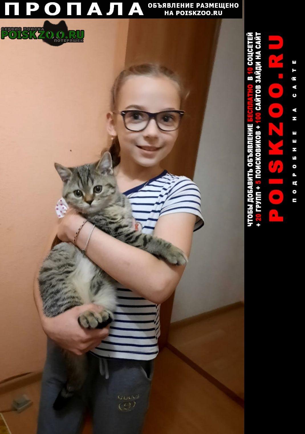 Пропал кот чертаново южное Москва