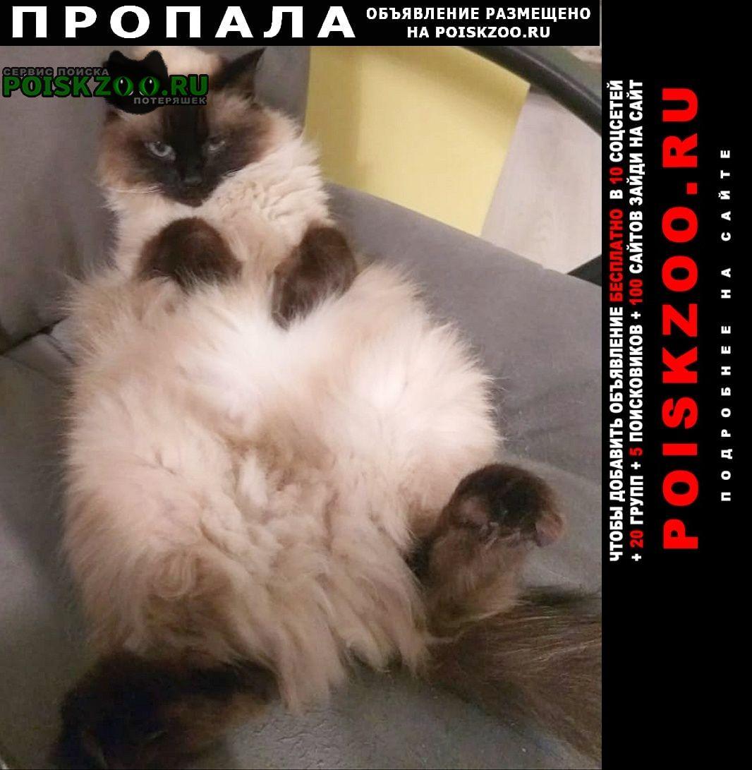 Пропала кошка Тамбов