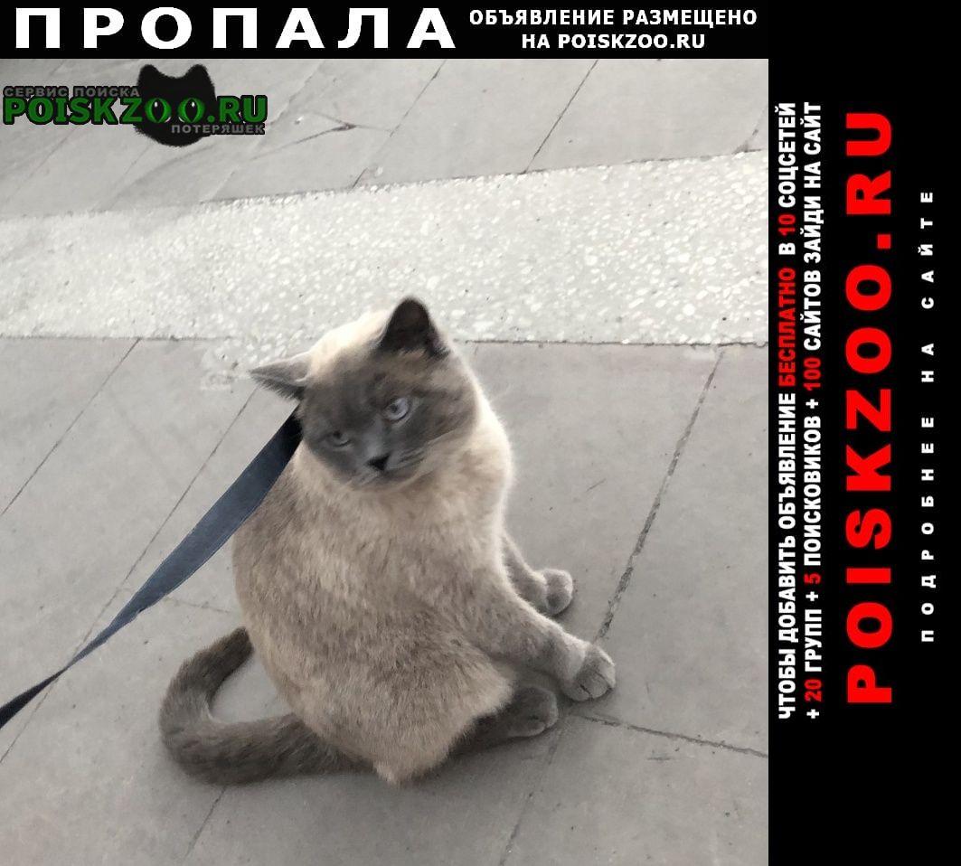 Пропал кот ( ) Владикавказ